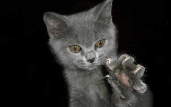 кошки, кошку, когти, zhivotnye,