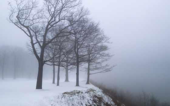 winter, trees, снег, туман, дерево, природа, dry,