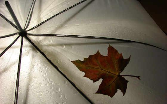 дождь, зонтик, погода, разное, лист, leav,