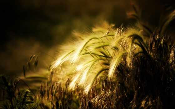 анимация, записи, flash, poetry, бабушки, liveinternet, хочу, everything, пшеница,