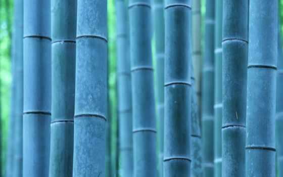 красивый, макро, purple, bonsat, дерево, большой, растение, бамбук, maple