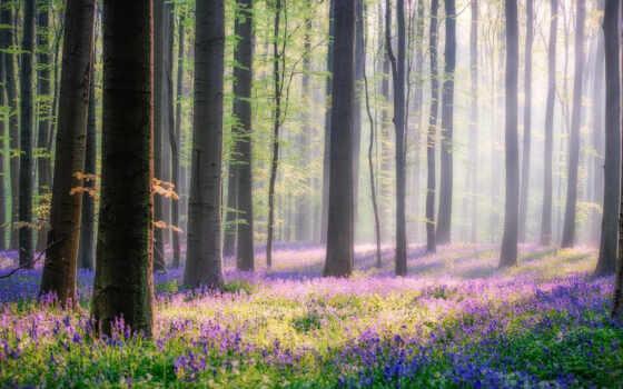 коллекция, лес, user, ван, смотреть, het