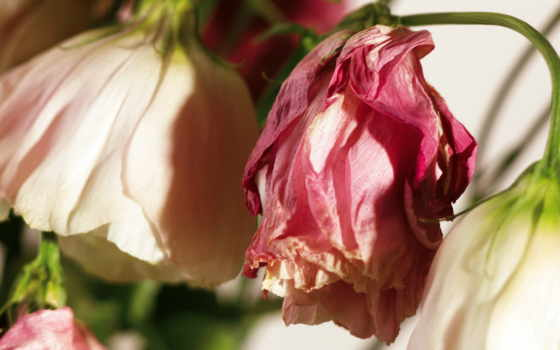 flowers, september Фон № 2226 разрешение 1920x1080