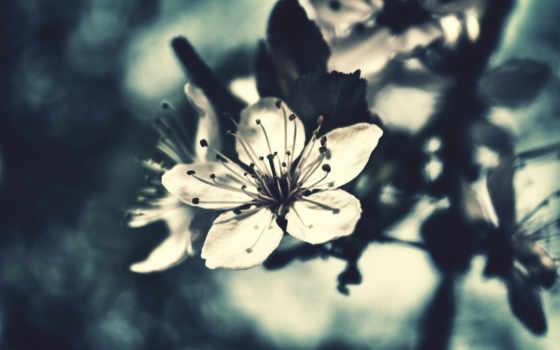 коллекция, страница, весна