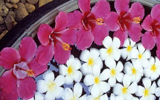 цветы, blabla