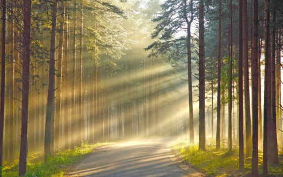 woods, sunshine, free,