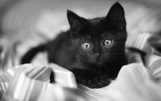 кот, котенок, лежит, black, gatto, грустный, малыш, белые, чёрно,