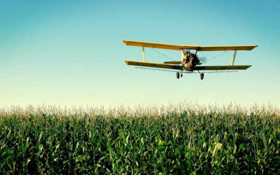 ан, самолёт, полей, со, кукурузным, полем, совершает, полет, поле,