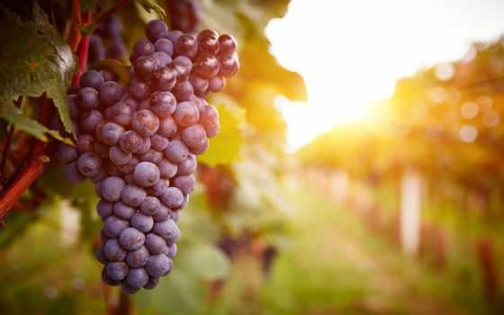 вино, vineyards, каракерт, деревня, группы, одноклассниках, изображение, закат,