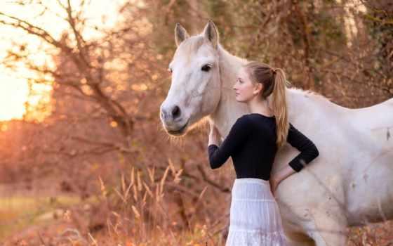 лошадь, zhivotnye, природа, девушка, боджек,