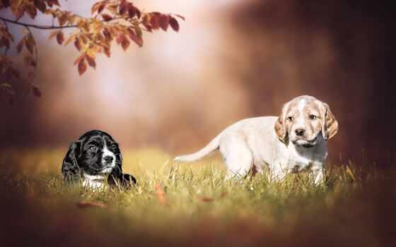 собака, щенок, природа, трава, love, cute, side, утро