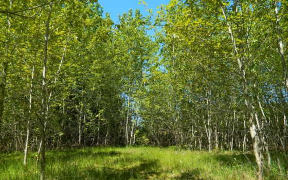 лес, природа, взгляд, поляна, деревья, landscape, осень, водопад,