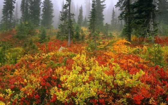 лес, осень, mist