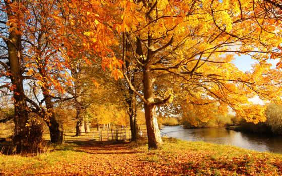 осень, деревя, природа