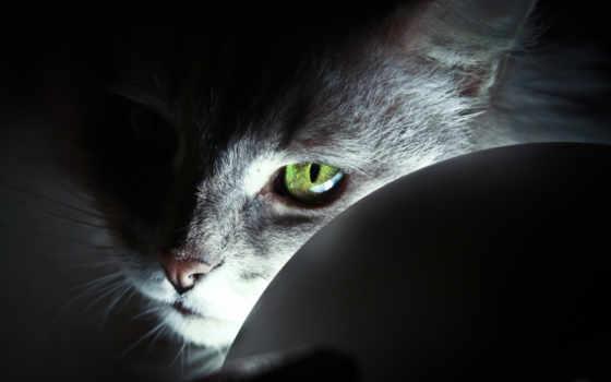 свет, zhivotnye, глаз
