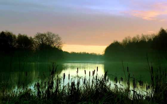 камыш, озеро, камыши, лес, утро, туман,