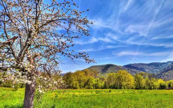 весна, природа, поле, color, небо, дерево,