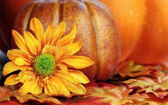 тыква, осень, листва, цветы, лепестки, yellow, урожай, еще, life,