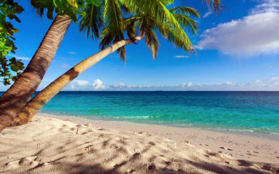 море, пляж, palm, песок, tropic, summer