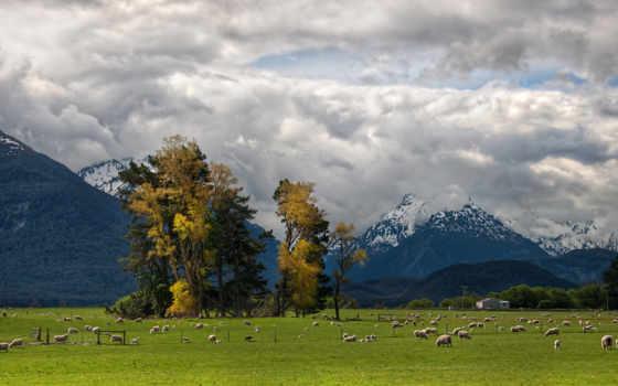 овцы, фотографии, альпы, природа, ферма, пейзажи, овечки, пастбище, стадо, стада, овца, картинка, животные, деревья, овечка, картинку, правой, кнопкой, мыши, скачивания, ней, разрешением, выберите, sa