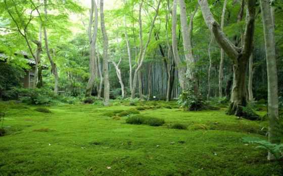 лес, природа, gif, фоны, фона,
