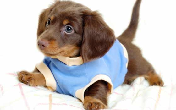 год, new, собаки, встречать, свой, короны, за, красивые, мне, их,