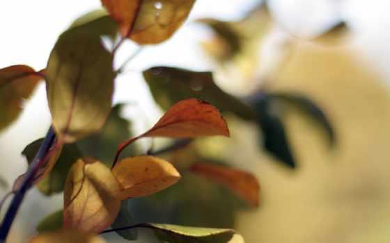 смена, cannot, листва, те, осень, их, minds, anything, лист, природа,