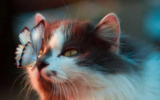 бабочка, нос, кот, sit, девушка, нежность, blue