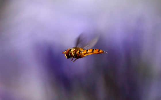 крылья, макро