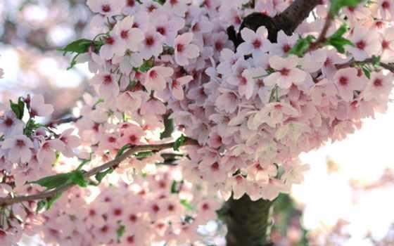 весна, цветы, цветение