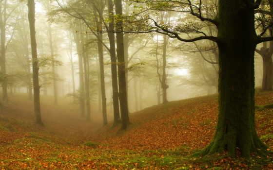осень, деревя, туман