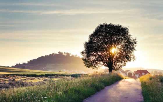 рассвет, sun, небо, без, регистрации, landscape, дерево, дорога, красивые,
