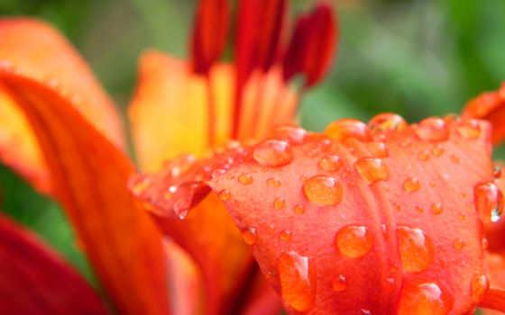petals, макро, лепесток, бабочка,