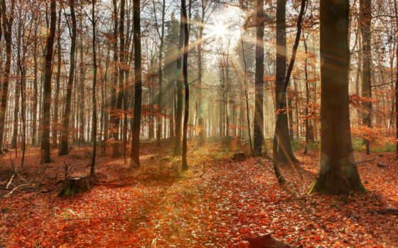 осень, sun, уже, коллекция, загружено, лучшая,