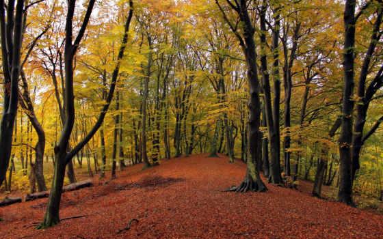 леса, vidaafectomente, zoom, devushki,