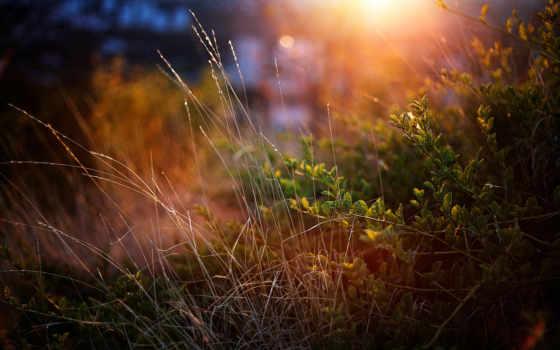 трава, зелёный, макро, кусты, rays, cvety, природа, закат,