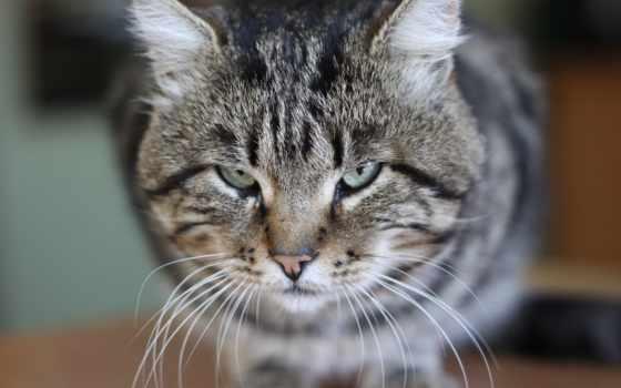 красивые, cats, ремонт, кошки, красивая, квартирный, свет, photos, взгляд, прозорливый, прищуренные,