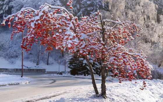 белокуриха, зимой, winter, алтай, дерево,