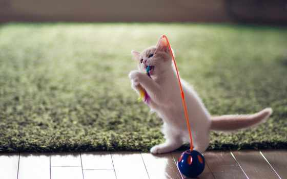 кот, котенок, играет