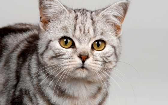 кошек, кот, кошки