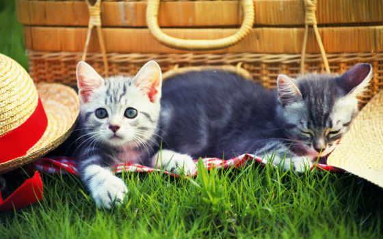 котенок, пикник, кошки, трава, шляпа, cats, одеяло,