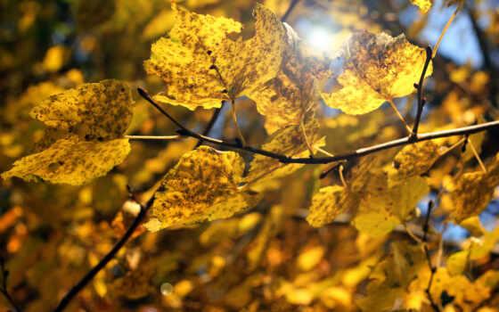 осень, лист, yellow, makryi, категория