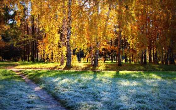 осень, лес Фон № 33679 разрешение 1920x1200