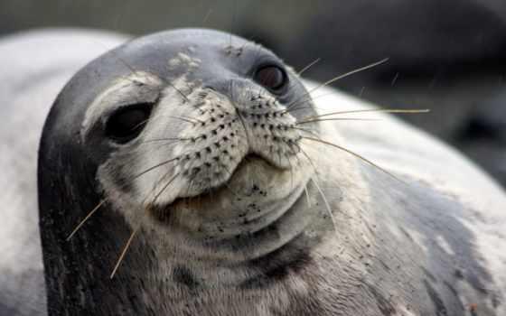zhivotnye, desktop, тюлень, пингвин, stars, взгляд, closeup,