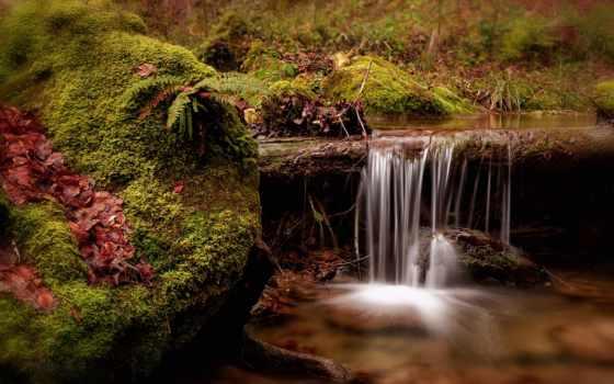 swiss, швейцария, природа, páfrány, photos, водопады, trees, качество, фона, высокое, мох,