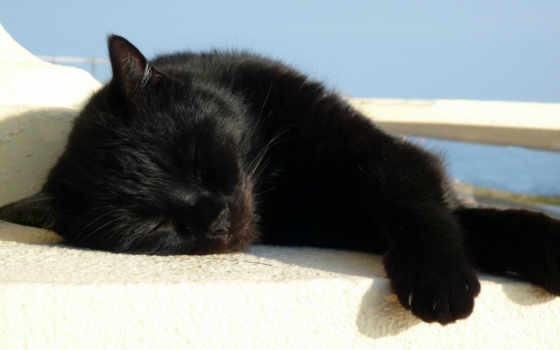 кот, black, большие, микс, чему, снится, сонник, мне,
