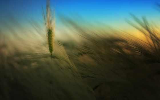 поле, небо, lavender, дерево, поля,