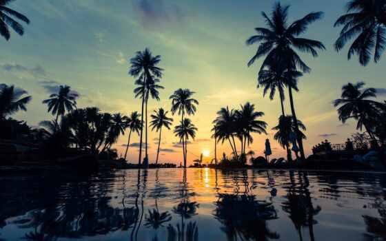 palm, million, фото, дерево, app, shutterstock, illustration, вектор, royalty, tourism, dusk