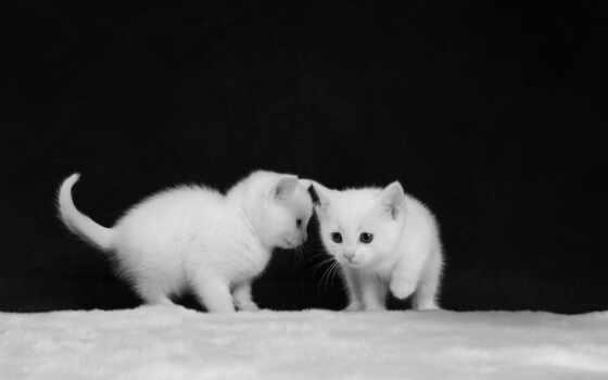 white, котенок, black, белый, два, чёрный, dva, anim, six, животное, живопись
