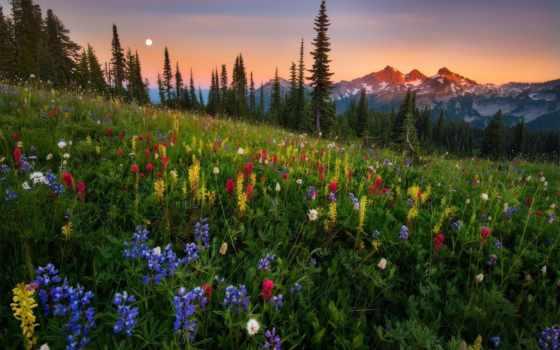 природа, закат, количество